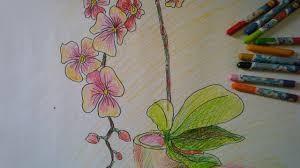 Tả cây hoa lan
